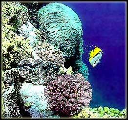 Фотогалерея коралловых рифов